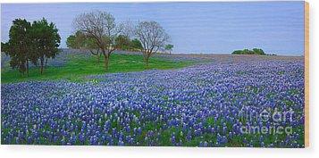 Bluebonnet Vista - Texas Bluebonnet Wildflowers Landscape Flowers  Wood Print by Jon Holiday