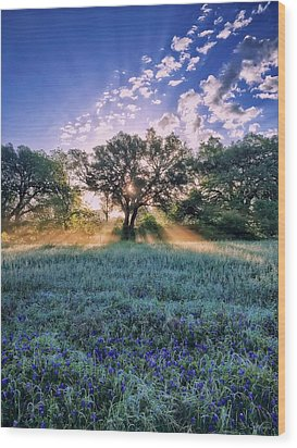 Bluebonnets Wood Print