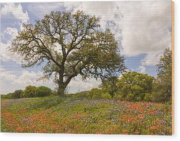 Bluebonnets Paintbrush And An Old Oak Tree - Texas Hill Country Wood Print