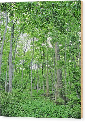Blueboonet Swamp Baton Rouge La Wood Print