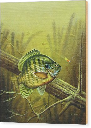 Bluegill And Jig Wood Print by JQ Licensing