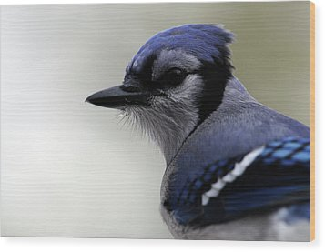 Wood Print featuring the photograph Bluejay by Mike Martin