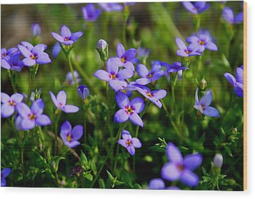 Wood Print featuring the photograph Bluets by Kathryn Meyer