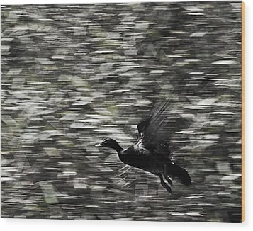 Wood Print featuring the photograph Blurry Bird by Ron Dubin