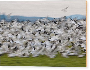 Blurry Birds In A Flurry L467 Wood Print by Yoshiki Nakamura