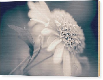 Wood Print featuring the photograph Blushing Mum by Julie Palencia