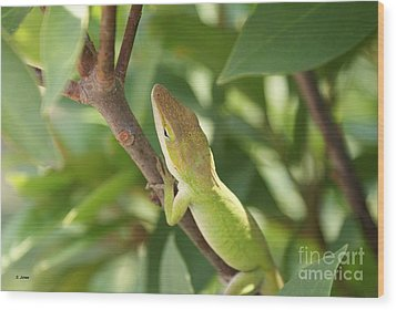 Blusing Lizard Wood Print