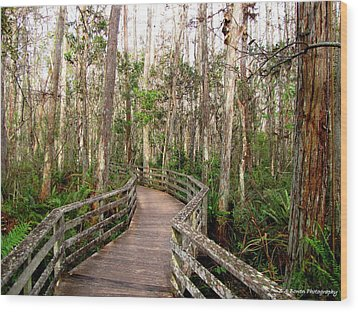 Wood Print featuring the photograph Boardwalk Through Corkscrew Swamp by Barbara Bowen