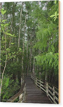 Boardwalk Through The Bald Cypress Strand Wood Print by Barbara Bowen