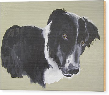 Bob The Border Collie Wood Print