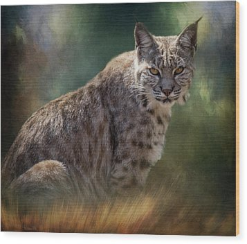 Bobcat Gaze Wood Print