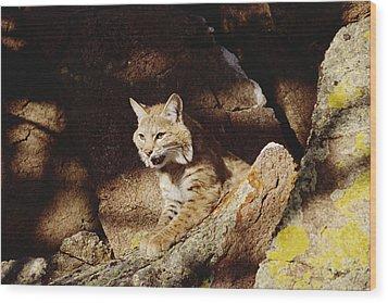 Bobcat Lynx Rufus Portrait On Rock Wood Print by Gerry Ellis