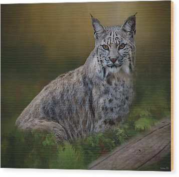 Bobcat On Alert Wood Print