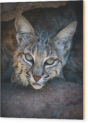 Bobcat Stare Wood Print