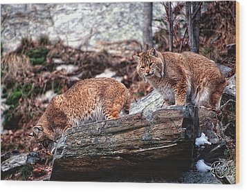 Bobcats On The Loose Wood Print by Brad Hoyt