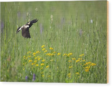 Wood Print featuring the photograph Bobolink In Paradise by Bill Wakeley
