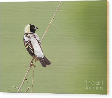 Wood Print featuring the photograph Bobolink Looking At You by Ricky L Jones
