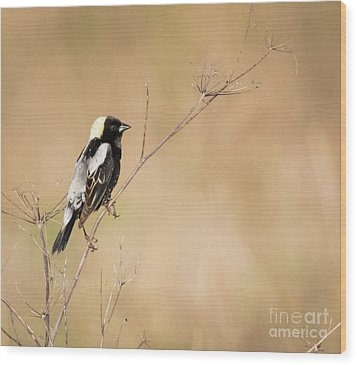 Wood Print featuring the photograph Bobolink  by Ricky L Jones