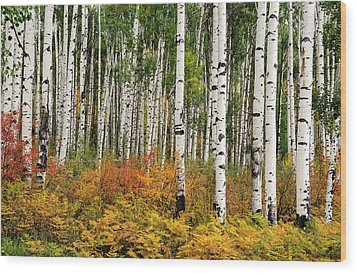 Wood Print featuring the photograph Bold And Magnificent Autumn by Tim Reaves