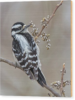 Wood Print featuring the photograph Bombay Hook Woodpecker by Robert Pilkington