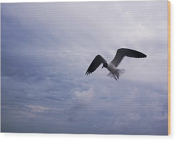 Wood Print featuring the photograph Bonaparte's Gull In Flight by Kathleen Stephens