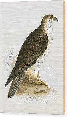 Bonelli's Eagle Wood Print by English School