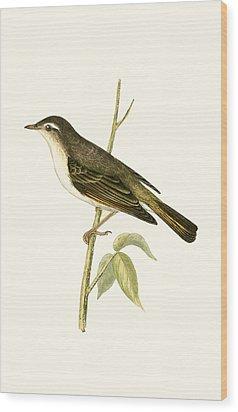 Bonelli's Warbler Wood Print by English School