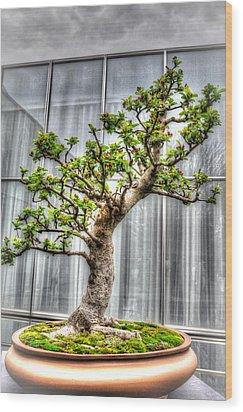Bonsai Tree II Wood Print