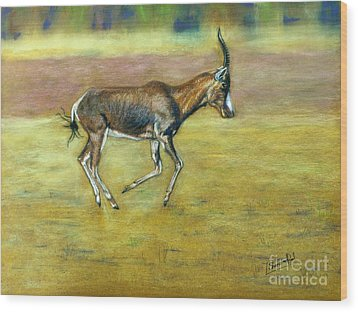 Bontebok Wood Print