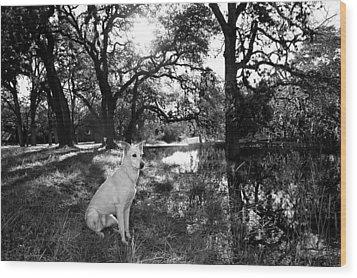 Boo Ranch Dog Wood Print by Jimmy Bruch