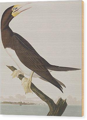 Booby Gannet   Wood Print by John James Audubon
