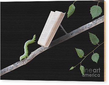 Book Worm Wood Print by Cindy Singleton