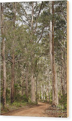 Wood Print featuring the photograph Boranup Drive Karri Trees by Ivy Ho