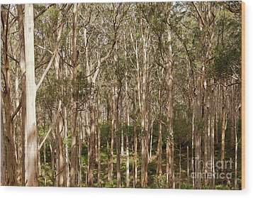 Wood Print featuring the photograph Boranup Forest  by Ivy Ho