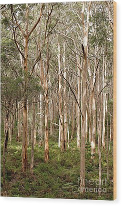 Wood Print featuring the photograph Boranup Forest Portrait by Ivy Ho