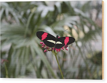 Borboleta Butterfly Wood Print