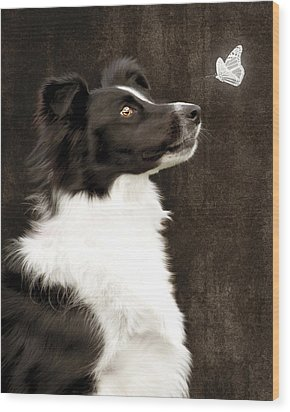 Border Collie Dog Watching Butterfly Wood Print