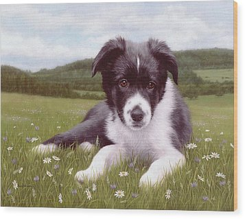 Border Collie Puppy Painting Wood Print by Rachel Stribbling