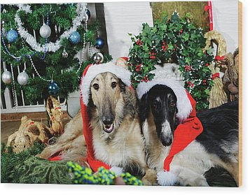 Wood Print featuring the photograph Borzoi Puppies Wishing A Merry Christmas by Christian Lagereek