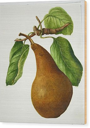 Wood Print featuring the painting Bosc Pear by Margit Sampogna