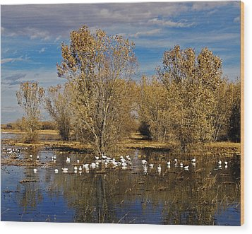 Bosque Del Apache Wood Print by Kurt Van Wagner