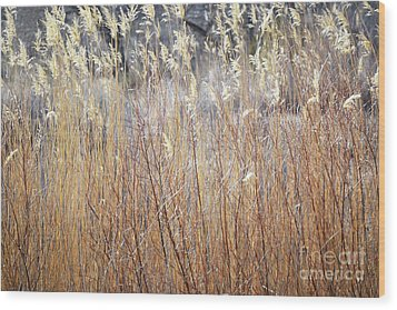Wood Print featuring the photograph Bosque Desert Willows by Andrea Hazel Ihlefeld