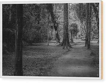 Bosque Do Silencio-campos Do Jordao-sp Wood Print