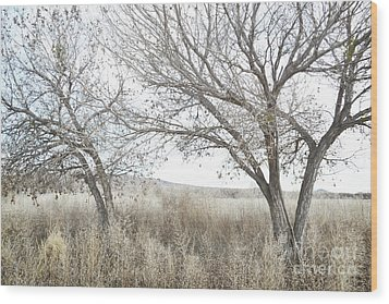 Wood Print featuring the photograph Bosque Dreamy Tree Field by Andrea Hazel Ihlefeld
