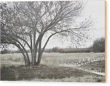 Wood Print featuring the photograph Bosque Tree Snow Geese by Andrea Hazel Ihlefeld