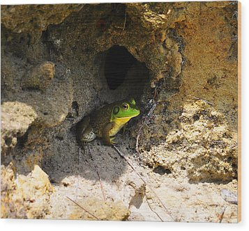 Wood Print featuring the photograph Boss Frog by Al Powell Photography USA