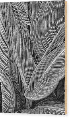 Boston Common Study 11 Wood Print