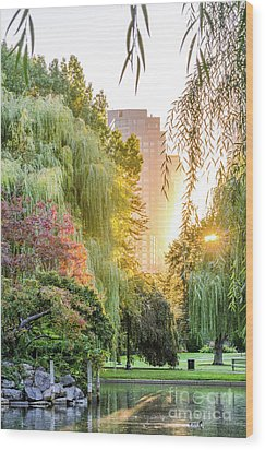 Boston Public Garden Sunrise Wood Print