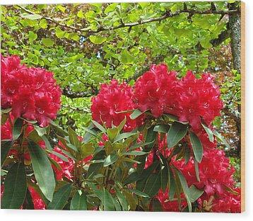 Botanical Garden Art Prints Red Rhodies Trees Baslee Troutman Wood Print by Baslee Troutman
