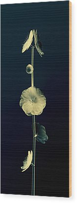 Botanical Study 6 Wood Print by Brian Drake - Printscapes